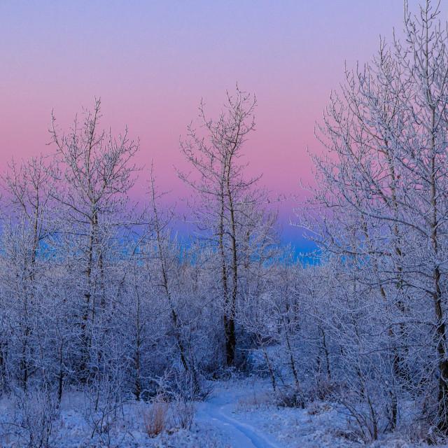 """Wintry Landscape"" stock image"