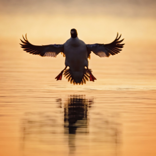 """""""Sunrise Landing"""" stock image"""