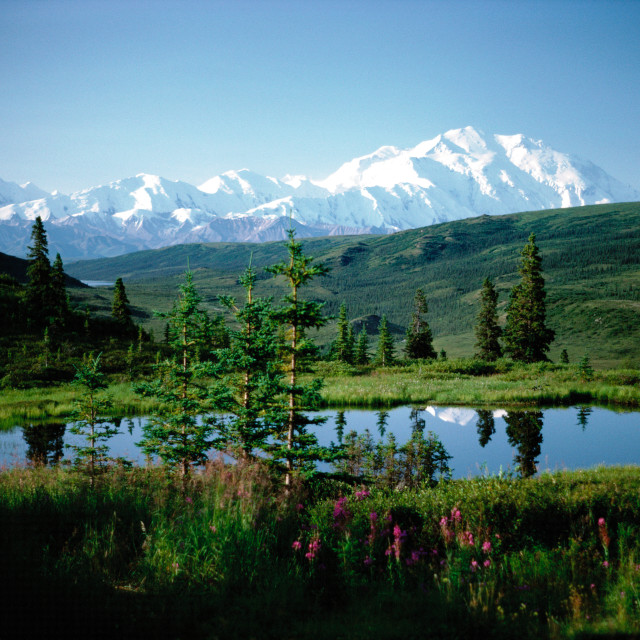 """Denali Wilderness"" stock image"