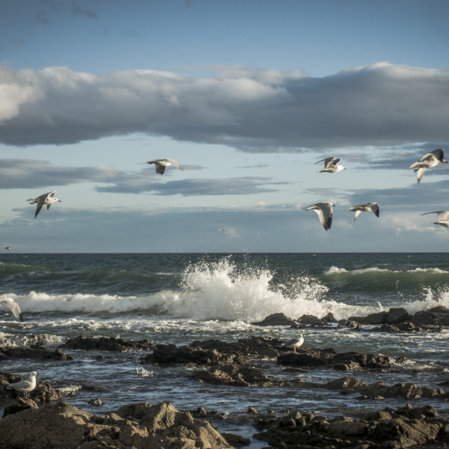 """""""Scenic seascape with gulls"""" stock image"""
