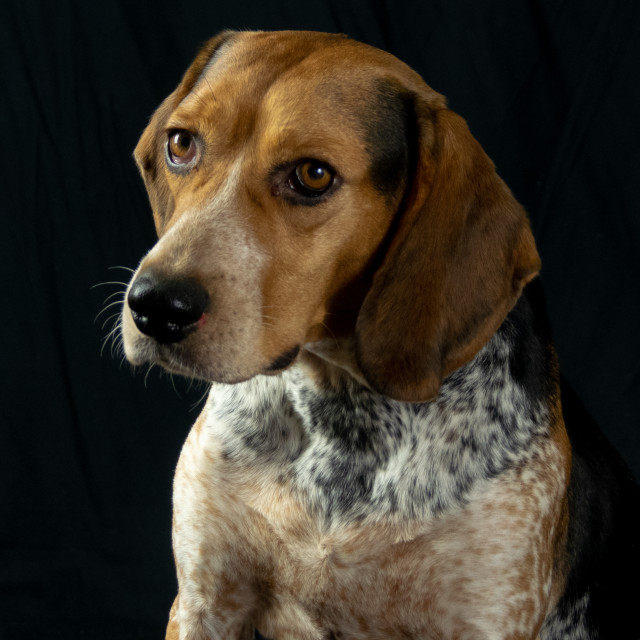 """""""Dog portrait"""" stock image"""