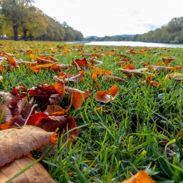 """Autumn leaves, The Embankment, Nottingham"" stock image"