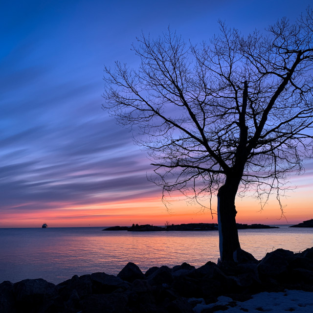 """""""The tree stands alone, Marquette"""" stock image"""