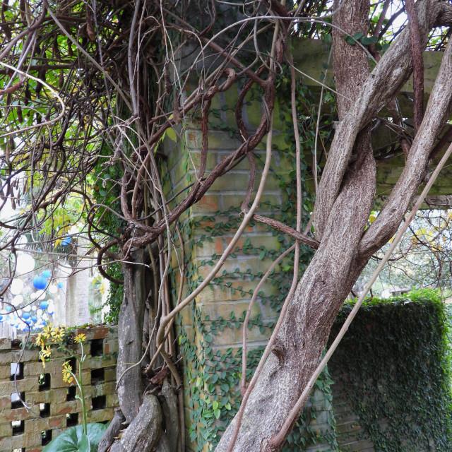 """Tangled Tree"" stock image"
