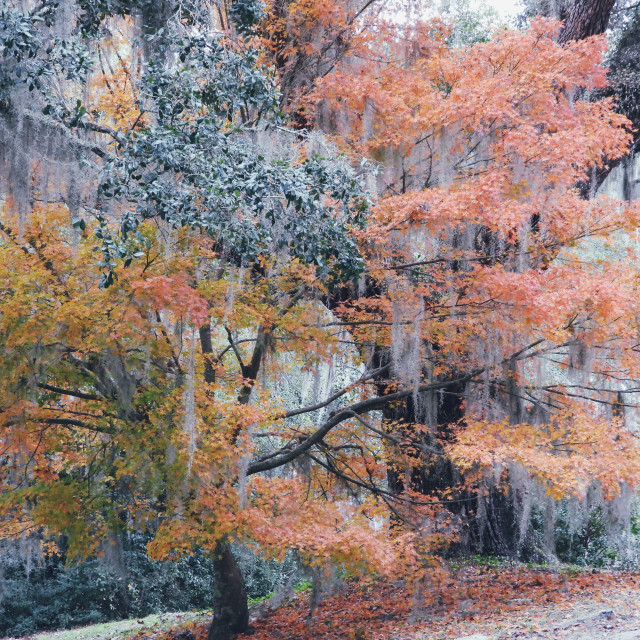 """""""Pastel Landscape I"""" stock image"""