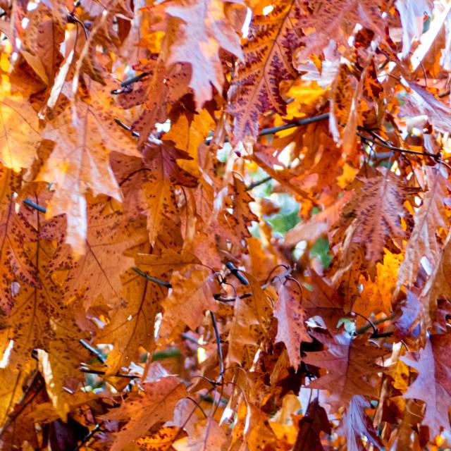 """Autumn Leaves"" stock image"