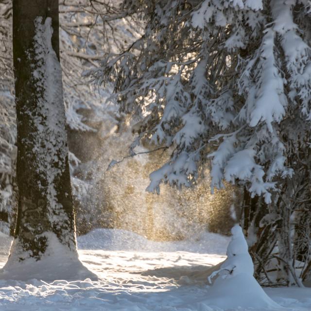 """Sunny snowfall"" stock image"