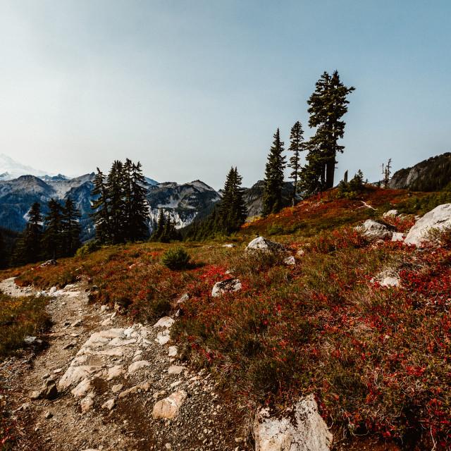 """PNW Hiking Trail"" stock image"