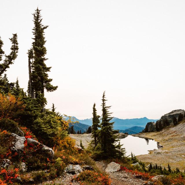 """""""Lake Scene"""" stock image"""