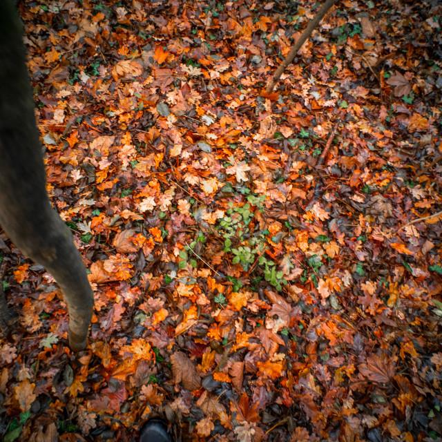 """Autumn leaves 2"" stock image"