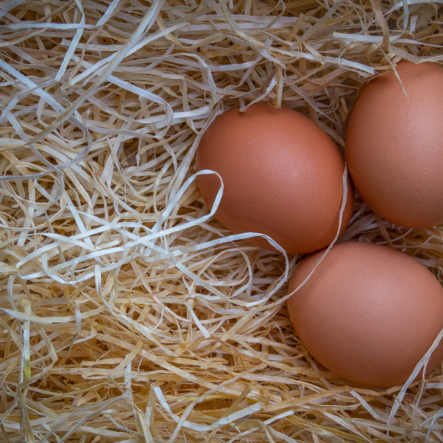 """Free Range Eggs With Copy Space"" stock image"