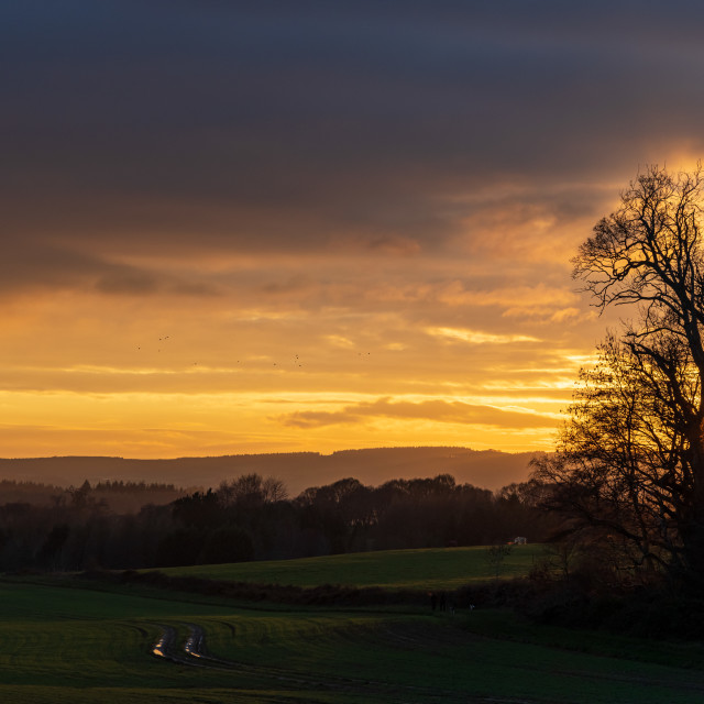 """""""Winter sunset over the Cowdray Estate"""" stock image"""