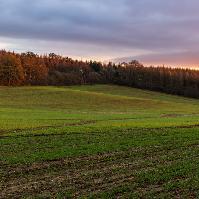 """""""Sunset tones in the Sussex countryside"""" stock image"""
