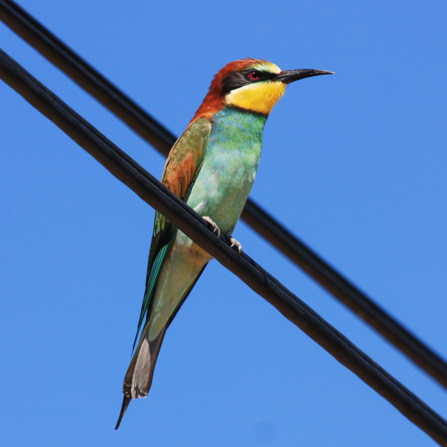 """""""Bird on a Wire"""" stock image"""