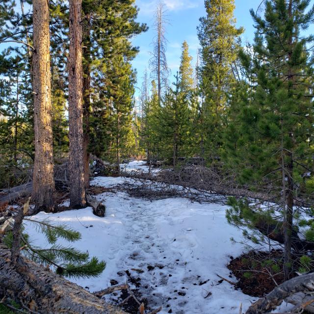 """Winter hike"" stock image"