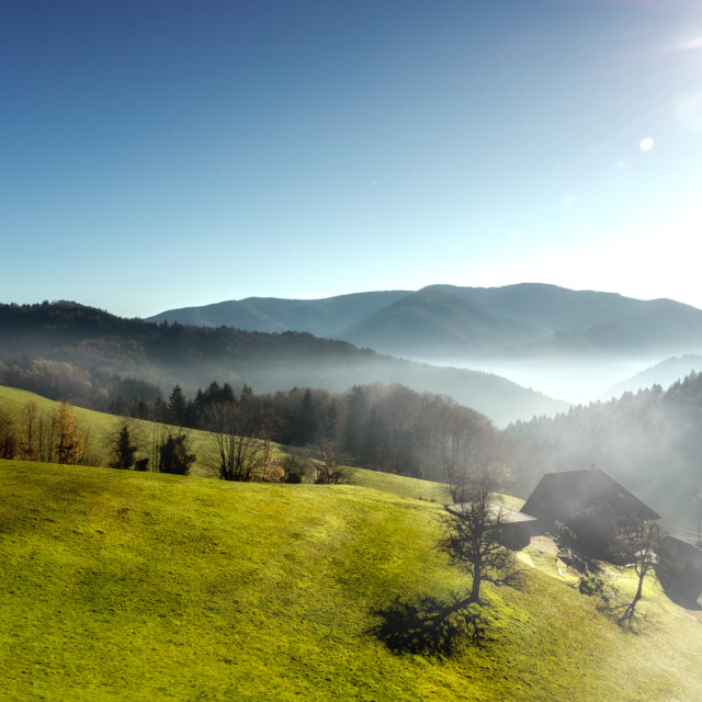 """""""Black Forest foggy scenery"""" stock image"""