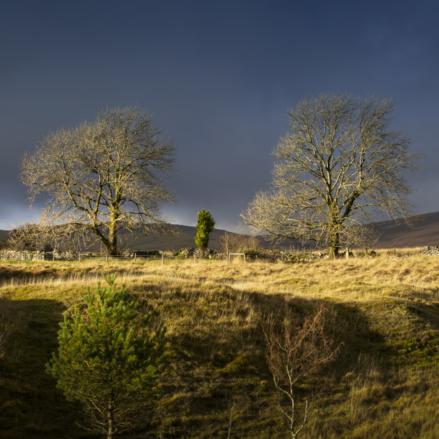 """""""Trees on the Penwyllt landscape"""" stock image"""