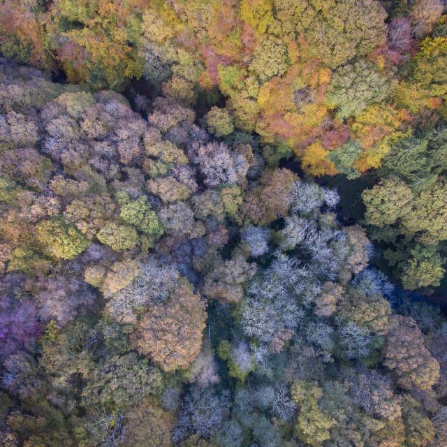 """Autumn tree tops"" stock image"