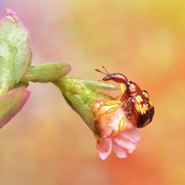 """""""Weevil in Wonderland"""" stock image"""