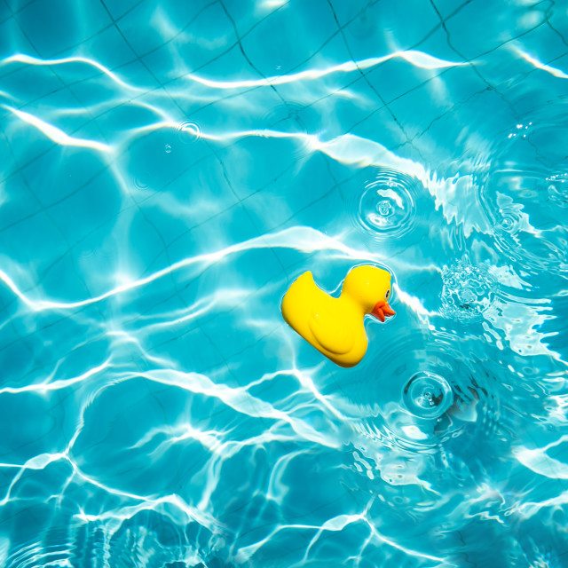 """Yellow rubber duck toy on swimming pool and sun rays"" stock image"