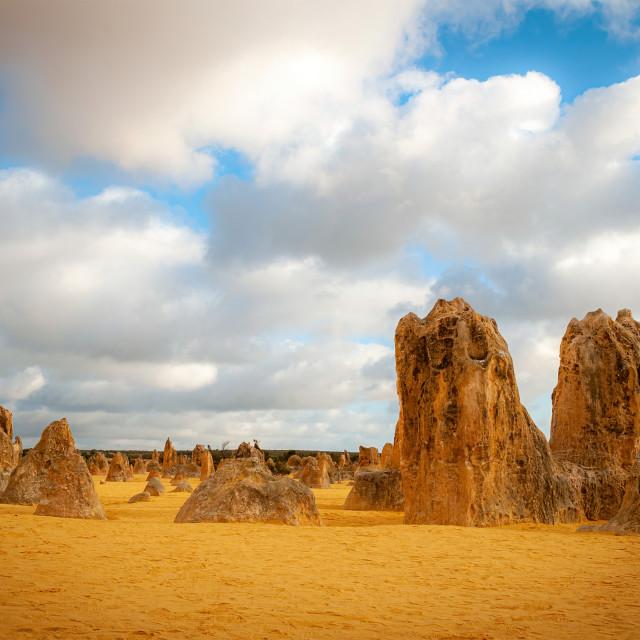 """""""Pinnacles Nambung National Park"""" stock image"""