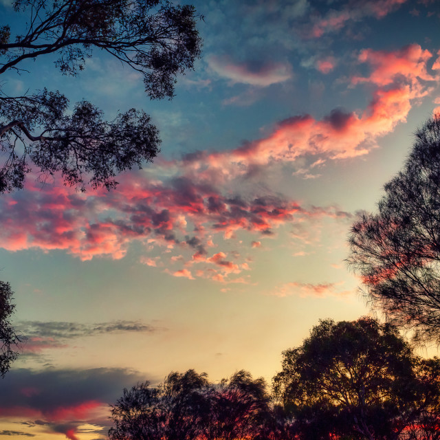 """""""Sunset with Gum Trees"""" stock image"""