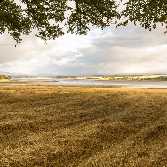 """""""Barley Straw waiting to be baled in a field alongside the Beauly Firth"""" stock image"""