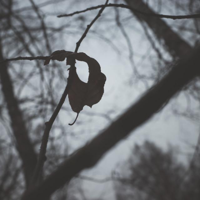 """""""Bog I (Dry Leaf)"""" stock image"""