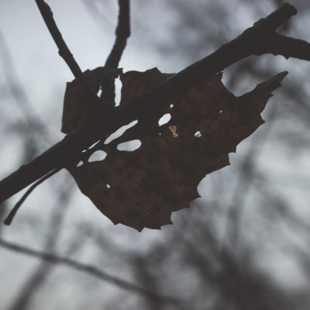 """Bog III (Dry Leaf)"" stock image"
