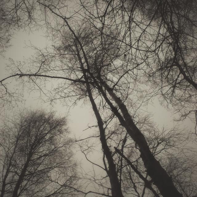 """""""Bog XII (Trees)"""" stock image"""