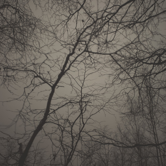 """Bog XVIII (Trees)"" stock image"
