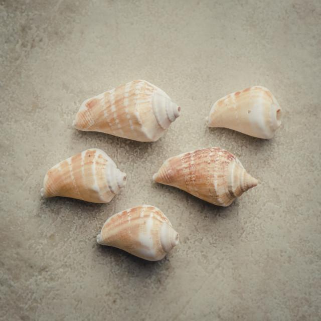 """""""Seashells"""" stock image"""