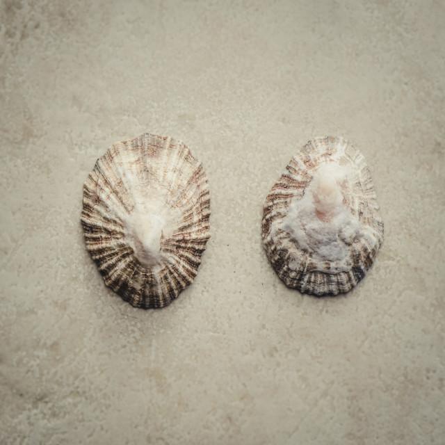 """Mediterranean sea shell"" stock image"