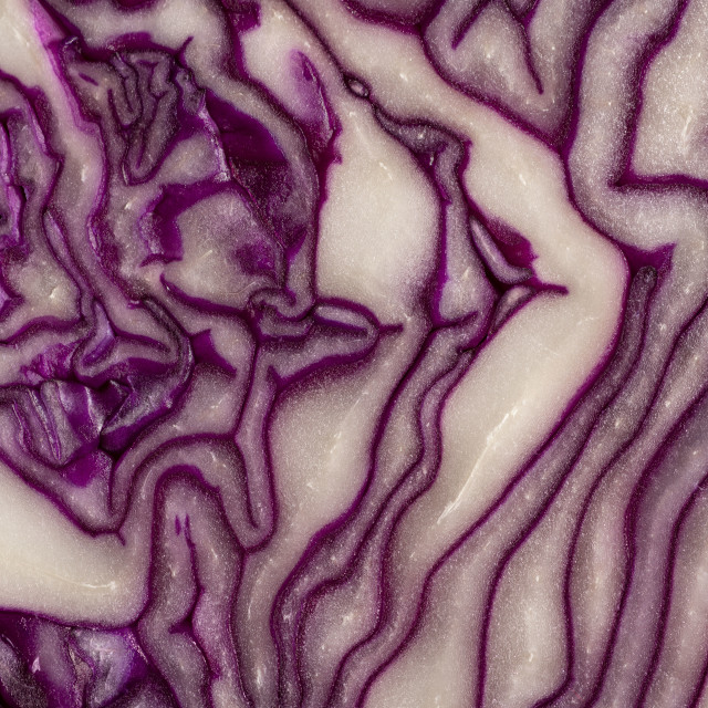 """""""Red cabbage sliced"""" stock image"""