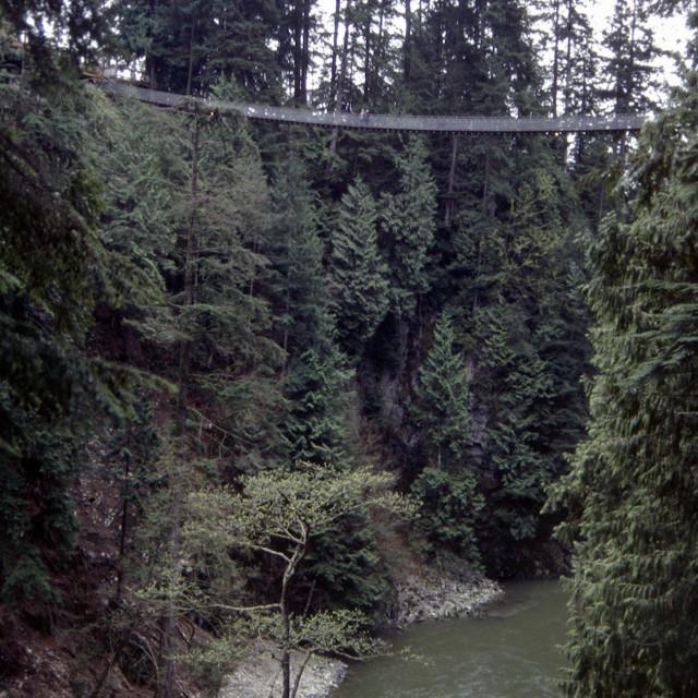 """The Capillano Suspension Bridge"" stock image"