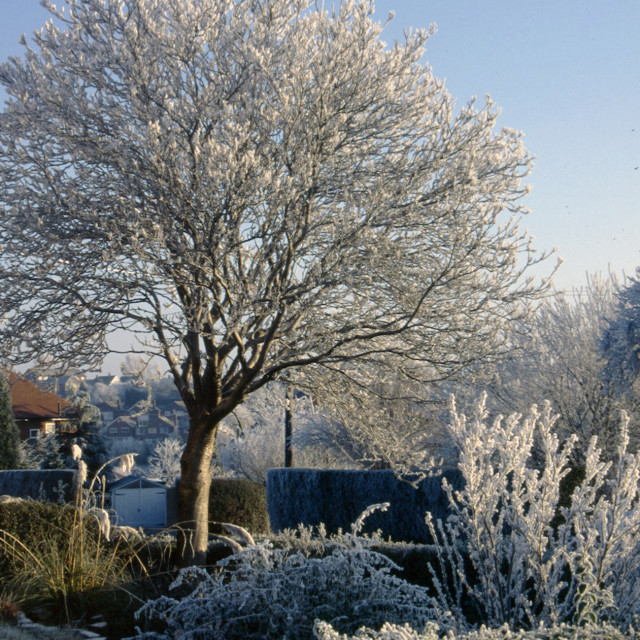 """Frosty morning plants"" stock image"
