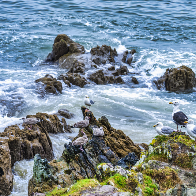 """""""Seagulls from Cawsand Bay, Cornwall UK."""" stock image"""