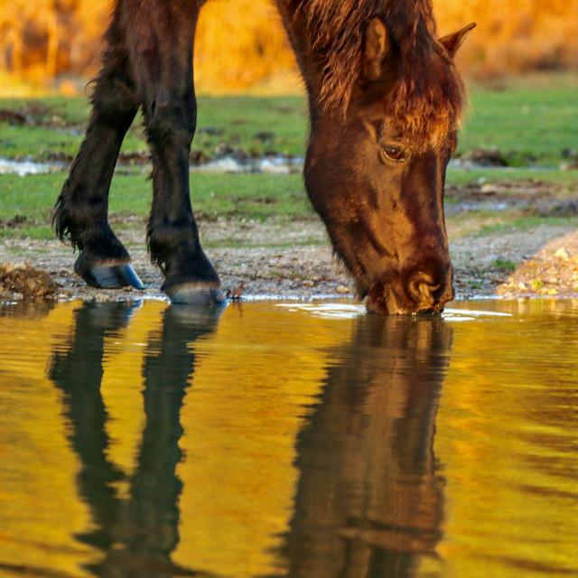 """""""Cadmans Pony"""" stock image"""