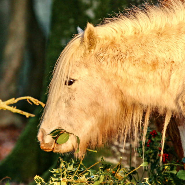 """""""Hungry Horse"""" stock image"""