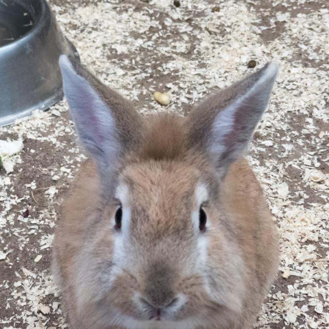"""Rabbit at Banham Zoo"" stock image"