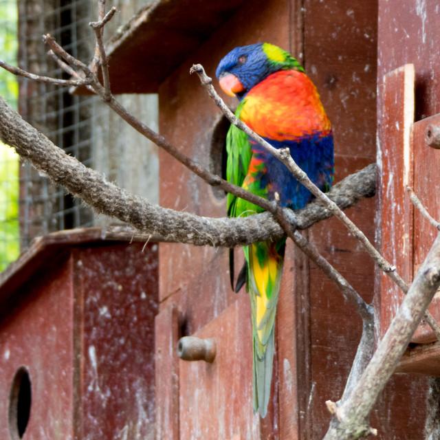 """Parrot at Banham Zoo"" stock image"