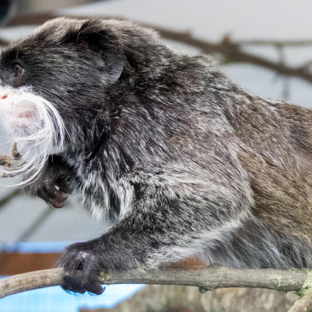"""""""Banham Zoo"""" stock image"""