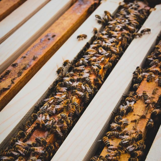 """Bee Hive"" stock image"