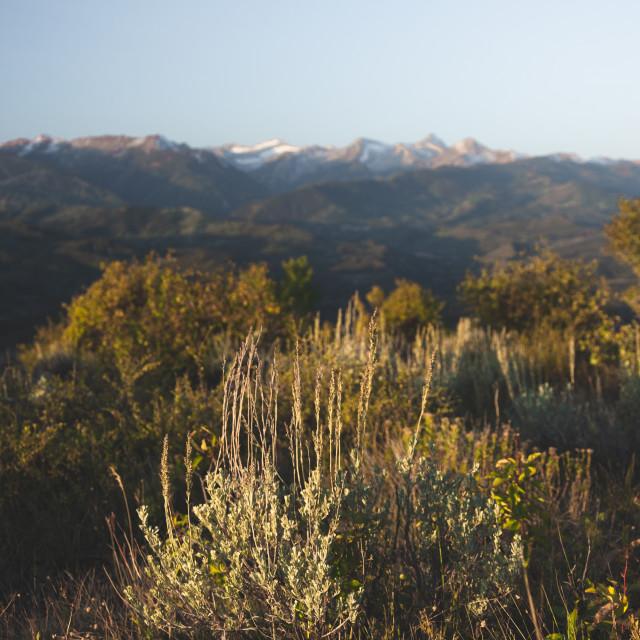 """Colorado Morning"" stock image"