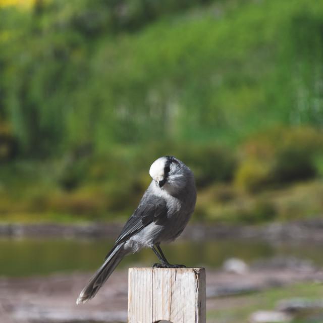 """Hungry Bird"" stock image"