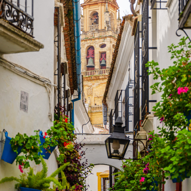 """""""Calleja de las Flores, with the Great Cathedral in the background. Cordoba, Spain"""" stock image"""