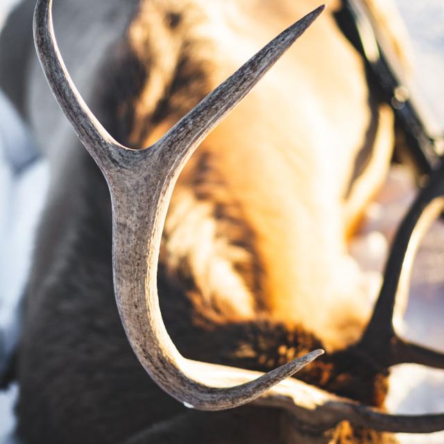 """""""Elk Fork"""" stock image"""