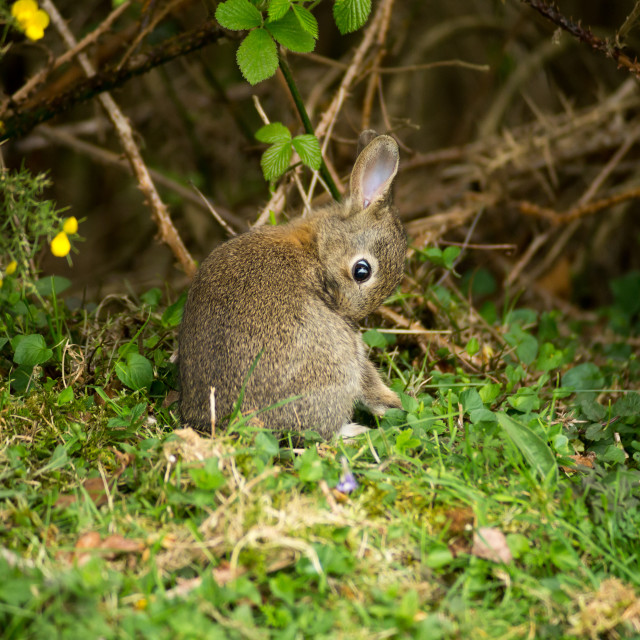 """""""Young Rabbit"""" stock image"""