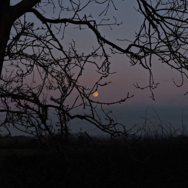"""""""Moon Early Evening Middleton Staffordshire December 2020"""" stock image"""