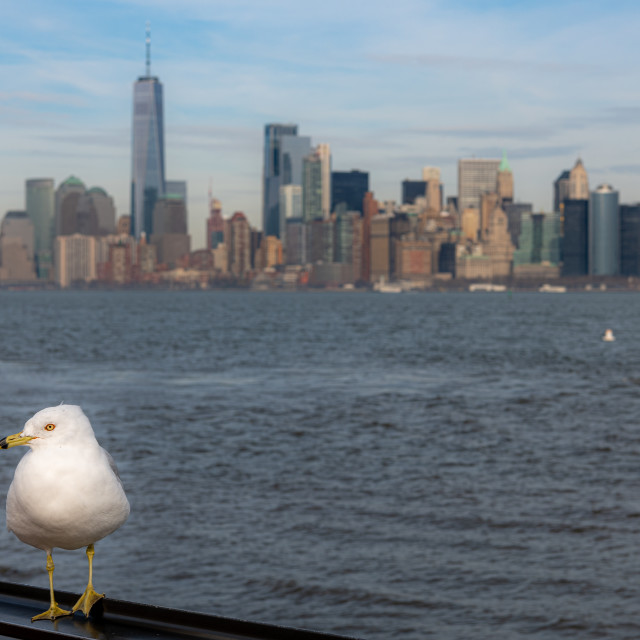 """Manhattan Seagull // Liberty Island, New York"" stock image"